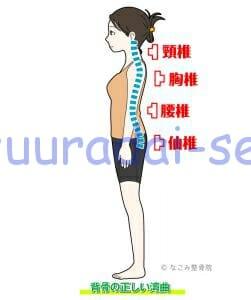 脊椎の正しい湾曲(整骨院)